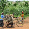 Africa championing the low carbon trajectory