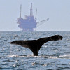 Fracking the ocean