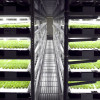Green innovation: Automated Agriculture