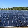How solar plants and animals match each other