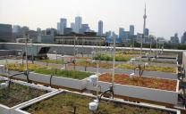 Green Roof Innovation Testing lab set up
