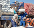 Drought relief support for sheep farmers